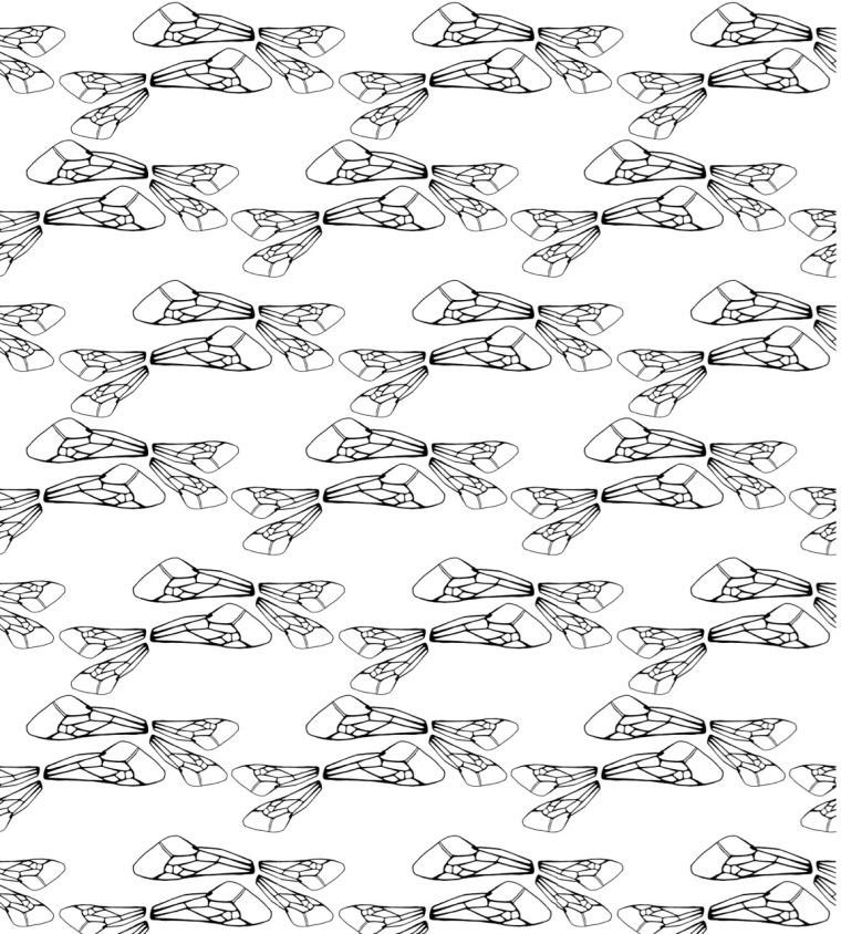 Irmi Hasenauer Design_Bienenflügel3 - 1